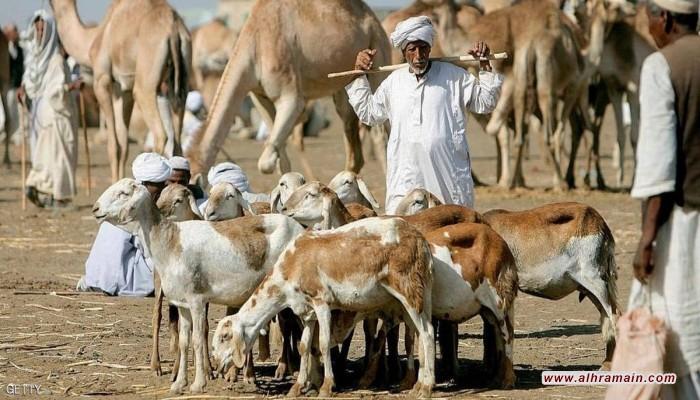 غضب سوداني من قرار سعوي بحظر استيراد الماشية